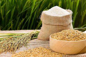 Để gạo Việt có chỗ đứng vững chắc trên thị trường quốc tế