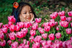 Ngắm trọn bộ ảnh thiên thần nhí 'khoe sắc' cùng hoa tulip Hà Lan