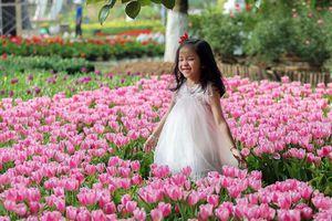 Người dân đổ xô đi ngắm cánh đồng hoa tulip Hà Lan tại Hà Nội