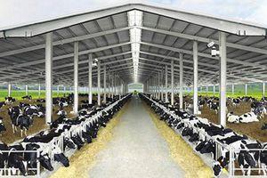 TH nhà cung cấp sữa tươi sạch hàng đầu VN, chiếm hơn 40% thị phần phân khúc sữa tươi