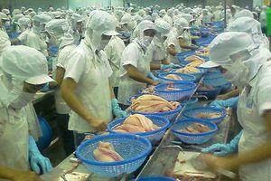 Giá cá tra 'lên đồng', coi chừng sập bẫy