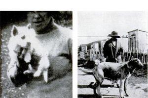 Rợn gáy với những bức ảnh chụp 'hồn ma' bí ẩn