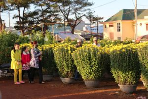 Bố trí một số tuyến đường bán hoa, cây cảnh phục vụ Tết Nguyên đán 2019
