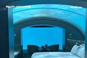 Ngủ cùng cá trong khách sạn sang trọng dưới biển Maldives