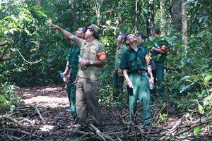 Cựu chiến binh sát cánh bảo vệ rừng chiến khu D