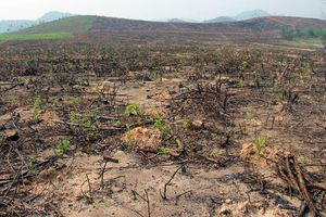 Nghệ An: Nghi vấn giả mạo hồ sơ hưởng chính sách trồng rừng