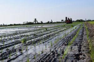 Nông nghiệp tái cơ cấu gắn với đổi mới mô hình tăng trưởng