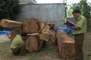 Kon Tum: Phát hiện bãi gỗ lậu lớn gần kho doanh nghiệp