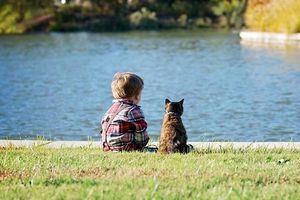 Những khoảnh khắc khiến bạn không thể không yêu những chú mèo
