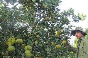 Chuyển đất ruộng chuyên màu sang trang trại cây ăn quả, thu 500 triệu đồng/năm