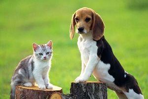 Đà Nẵng: Nuôi chó, mèo phải đăng ký với UBND phường