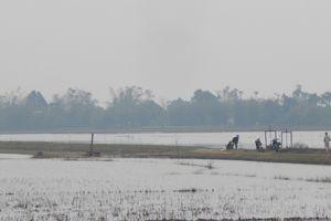 Thừa Thiên - Huế: Hàng trăm ha lúa vừa gieo sạ nguy cơ mất trắng