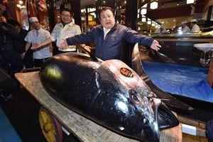 Cá ngừ 300 kg đấu giá kỷ lục 3,1 triệu USD ở Nhật Bản