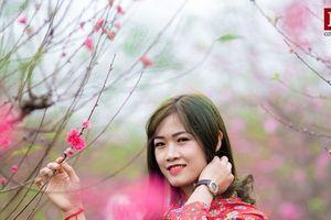 Ngắm hoa đào rực rỡ khoe sắc trên đường phố Hà Nội những ngày giáp Tết