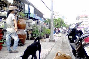 Quản lý chặt việc nuôi súc vật