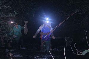 Đêm mưa lạnh vô rừng săn loài chàng hiu kiếm bộn tiền