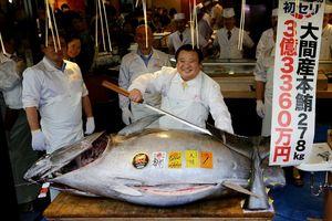 Nhà hàng Nhật Bản bỏ ra hơn 3 triệu USD cho một con cá ngừ vây xanh