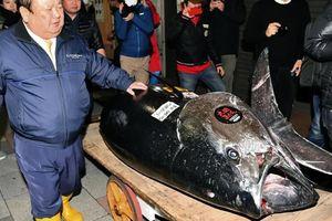 Cá ngừ 3,1 triệu USD