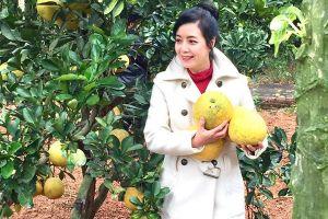 Nhà vườn thu hoạch hơn nghìn quả bưởi của NSƯT Chiều Xuân