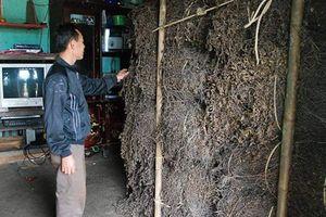 TQ cấm cửa thạch đen, Lạng Sơn xin giải cứu: Vì sao?