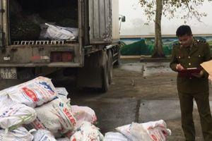 Thanh Hóa: Bắt giữ gần 1 tấn chân trâu bò bốc mùi hôi thối