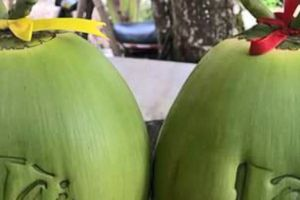 Vĩnh Long: Nhiều sản phẩm 'độc, lạ' phục vụ Tết Nguyên đán Kỷ Hợi 2019
