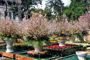 Sức hút tại Lễ hội hoa anh đào Nhật Bản 2019