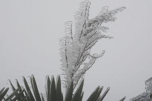 Mẫu Sơn (Lạng Sơn) là nơi lạnh nhất Việt Nam