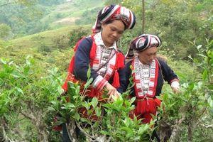Hà Giang: Phát huy hiệu quả chỉ dẫn địa lý các sản phẩm nông nghiệp