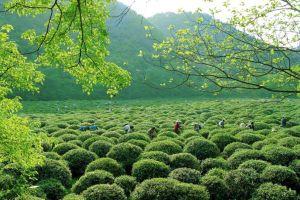 Trung Hoa danh trà