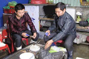 Phát hiện cơ sở bơm bột thạch agar vào tôm chết