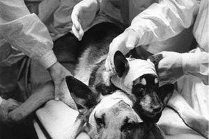 Thí nghiệm kỳ dị ghép đầu chó của nhà khoa học Liên Xô