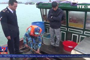 Tàu chở cá không rõ nguồn gốc bị bắt giữ