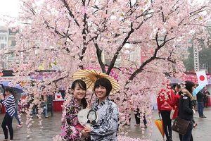 29 - 31/3: Lễ hội hoa anh đào Nhật Bản - Hà Nội 2019