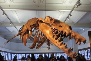 Phát hiện hóa thạch của quái vật thằn lằn chúa chuyên ăn cá voi ở Ai Cập