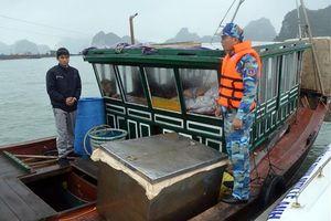 Phát hiện tàu vận chuyển 10.000 con cá hồng không giấy tờ