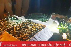 64 kg quả thuốc phiện 'ủ' trên xe khách tuyến Hương Sơn - Hải Phòng