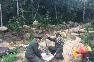 Bắc Giang: Thả động vật rừng về tự nhiên