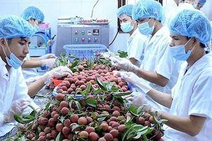 Năm 2018: Trung Quốc đứng vị trí thứ nhất về thị trường nhập khẩu rau quả của Việt Nam