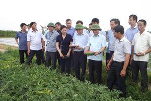 Thực hiện lời dặn của Chủ tịch Hồ Chí Minh: Bắc Ninh đẩy mạnh sản xuất nông nghiệp và xây dựng nông thôn mới