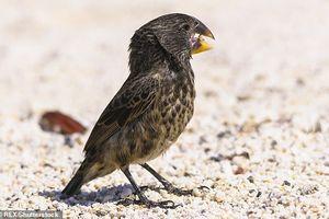 Khủng long bạo chúa chào thua trước sức cắn mạnh gấp 320 lần của chim sẻ