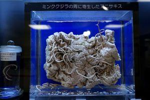 Bảo tàng ký sinh trùng khiến du khách dựng tóc gáy ở Tokyo