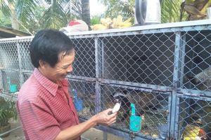 Người đầu tiên ở Vĩnh Long nuôi thành công chồn hương sinh sản