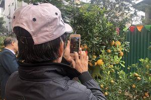 Hà Nội: Đặc sắc hội chợ tinh hoa quất cảnh Tứ Liên 2019