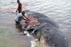 Tìm thấy xác cá voi với gần 6 kg nhựa trong bụng