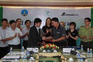 60.000 USD để bảo tồn voi Đắk Lắk được Tổ chức Động vật châu Á tài trợ