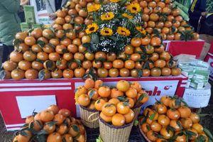 Tuyên Quang: 50 gian hàng tham dự Hội chợ cam sành Hàm Yên