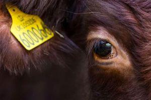 Ăn những thứ này thay thịt bò có thể cứu sống hàng triệu người mỗi năm