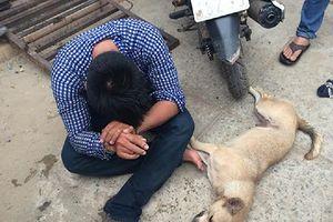 Nạn trộm chó hoành hành trong tháng củ mật