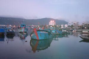 Thợ lặn vịnh Đà Nẵng bức xúc, 'bắt' tàu tận diệt chíp chíp giao biên phòng